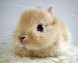 bunny11_jpg-magnum.jpg