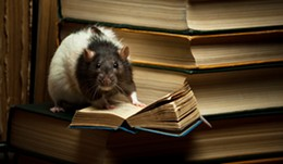 Get yer learn on, rat style.