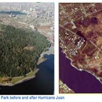 Halifax's urban forest plan moves forward