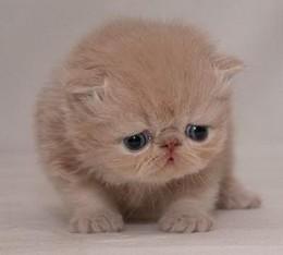 kitty_jpg-magnum.jpg