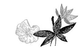 16.12_230featureflower2.jpg