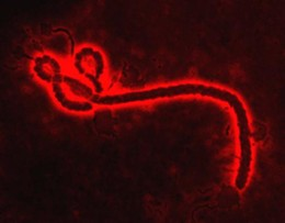 ebolared_png-magnum.jpg