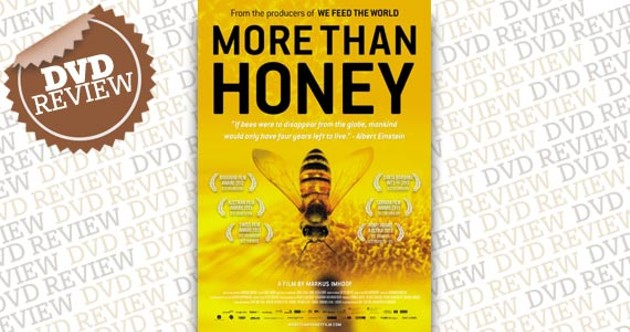 more-than-honey.jpg