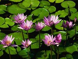 water_lilies_jpg-magnum.jpg
