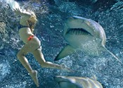 Not much bite to <i>Shark Night 3D</i>