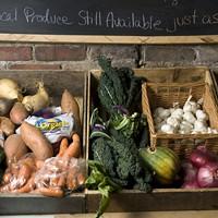 Organic basket case