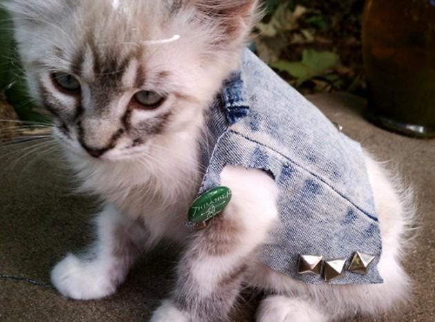 Punk cat has no money to buy albums.
