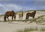 Sable Island designated as national park reserve