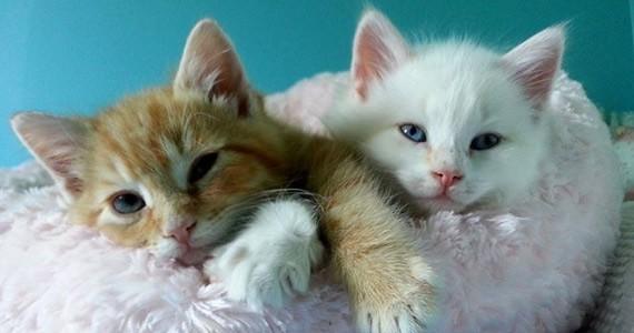 pets_kittens1.jpg