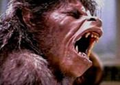 <i>The Swell Season</i> and <i>An American Werewolf in London</i>