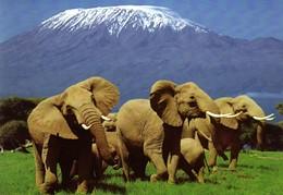 safari-in-kenya.jpg