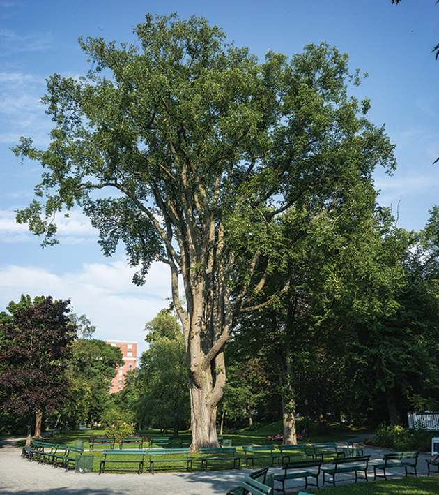 The urban forest master plan's parking lot expense for tree planting and pruning could get $200,000 - RILEY SMITH