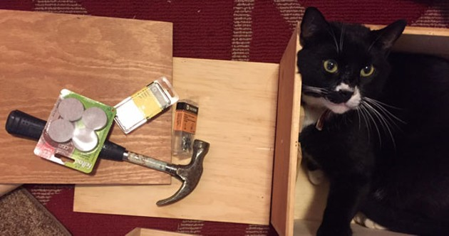 Building cat furniture is only slightly easier with thumbs. - HILLARY WINDSOR