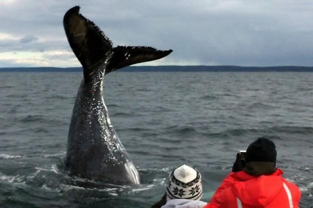 OCEAN EXPLORATIONS ZODIAC™ WHALE CRUISES