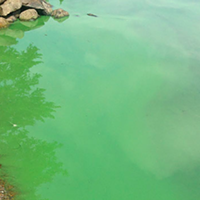Algae a blooming problem in Nova Scotia lakes