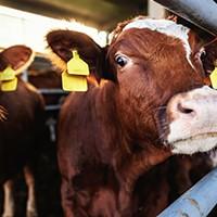 """Does fracked methane deserve """"natural"""" label?"""