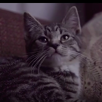 Watch: Dave Sampson's new video (there's a kitty in it)