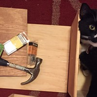 Drinking wine and making cat furniture