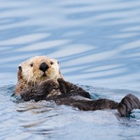 SCIENCE MATTERS: Marine protected areas are one piece of a complex puzzle