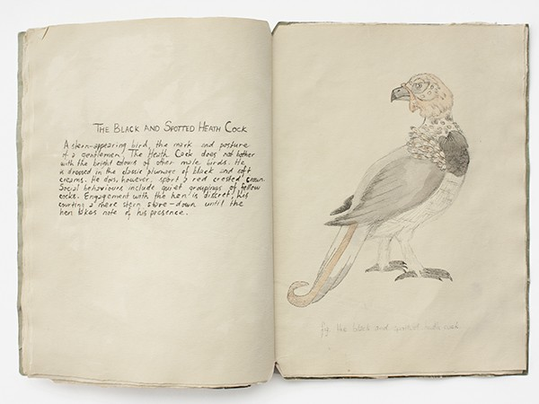 """""""A Further History of Uncommon Birds"""" by - Phillip S. Fairmount (1855-1889). - SUBMITTED"""