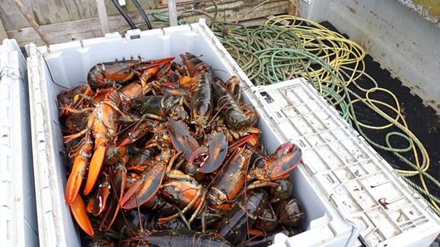 Clearwater is the largest holder of shellfish licenses and quota in Canada. - STEFAN SINCLAIR-FORTIN