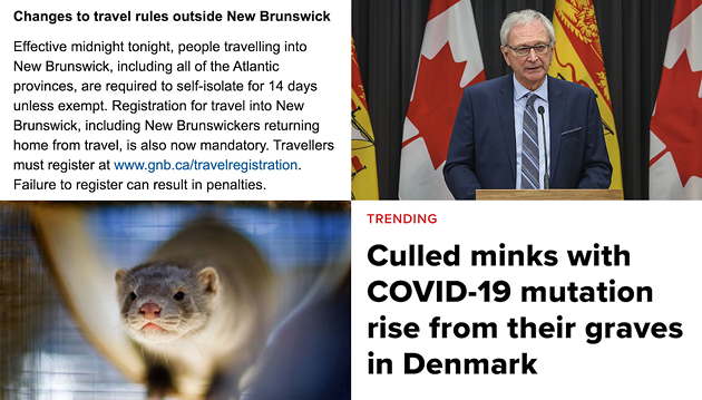 New Brunswick premier Blaine Higgs can have the zombie minks.