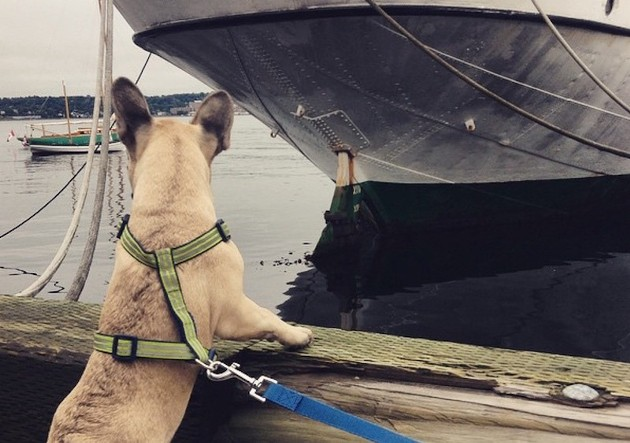 """""""So I saw my first boat today! I want one!"""" - VIA JEAN T RALPHIO ON INSTAGRAM"""
