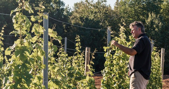 John Warner's vines are ripe for experimentation - NXN PHOTOGRAPHY