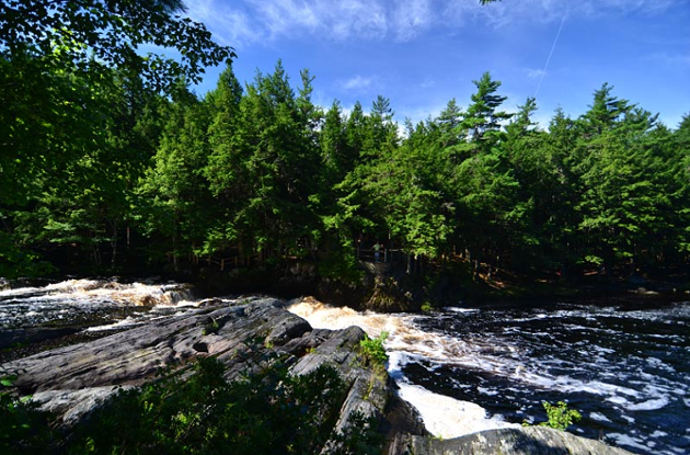 If these trees fall in a forest, does anyone care? - VIA NOVA SCOTIA