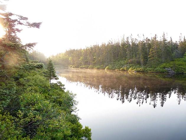 Purcells Pond - DAVID PATRIQUIN
