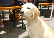 Pets and pints: Navigating the grey area around bringing your dog to the patio