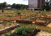 Common Roots Urban Farm awaits approval of their new home