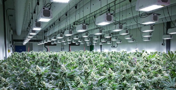 Cannabis: Peeling Back the Layers | Behind the Scenes with FIGR