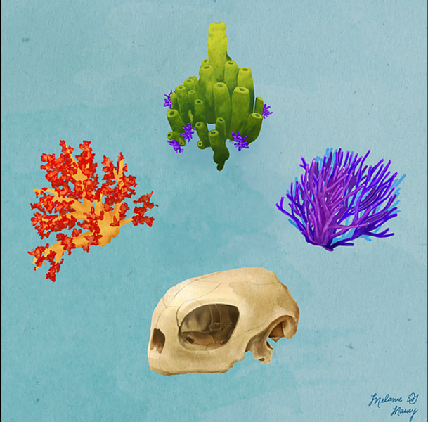 Chelonia Mydas and corals illustrated by one of Diversity in Nature's organizers. - MELANIE MASSE