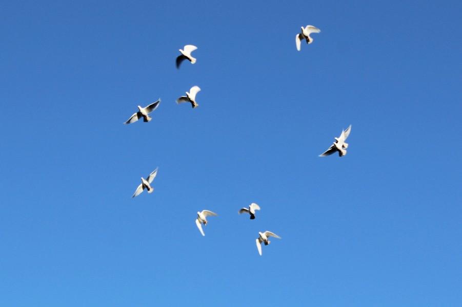 Smith's birds take to the sky. - ALEX COOKE