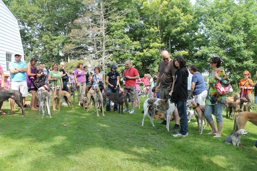 All-Breed Summer Extravaganza. - GREYHOUND PETS OF ATLANTIC CANADA