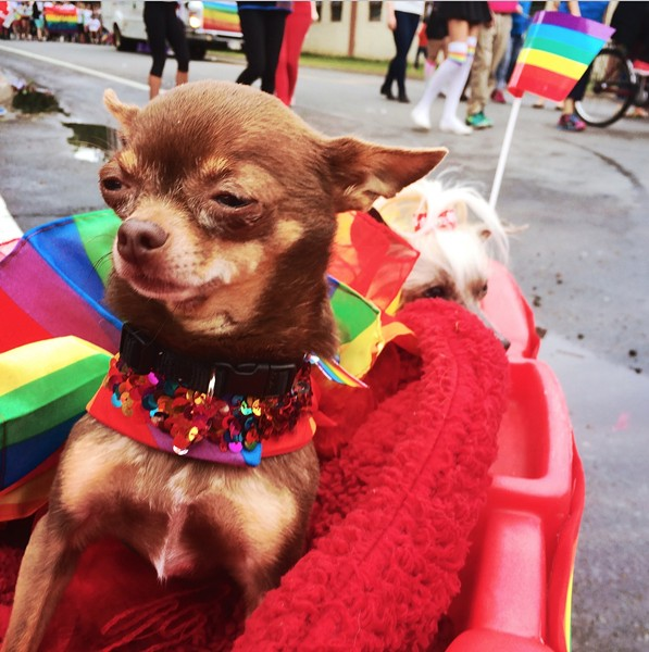 Proud pooches at the Halifax Pride Parade.