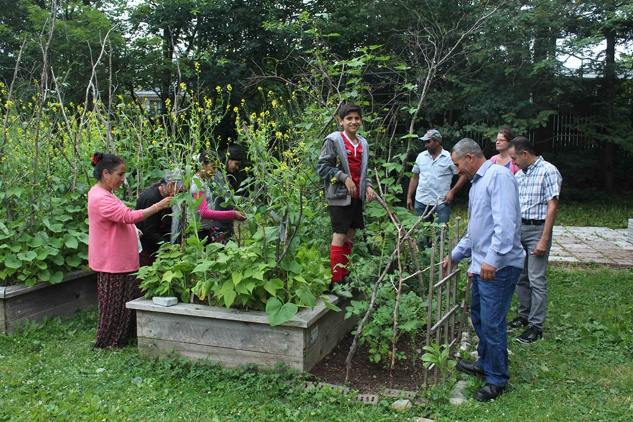 Gardeners from Nepal, Bhutan and Syria check to see what this plot, at the ISANS garden on Glenforest Drive, is producing. - VICTORIA WALTON