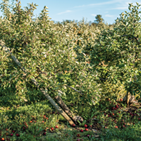 Grape growers escaped Dorian's force mostly unscathed, but famers—especially apple growers—were another story.