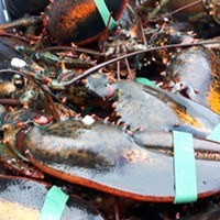 Lobster fresh out of St. Mary's Bay, which has been the epicentre of tension between Indigenous and non-Indigenous fishers.