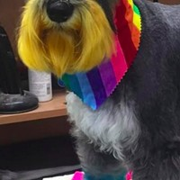 Let's hope to see this colourful bud from Happy Dogs Antigonish at tomorrow's Pride parade.