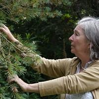 Irish botanist Diana Beresford-Kroeger guides us through the film.