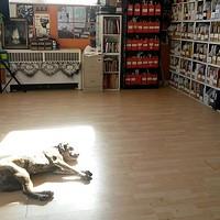 A dog enjoying a sunbeam at Radstorm.