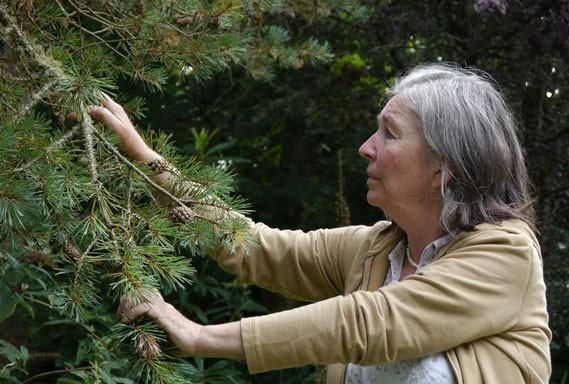 Irish botanist Diana Beresford-Kroeger guides us through the film. - TREESPEAK FILMS