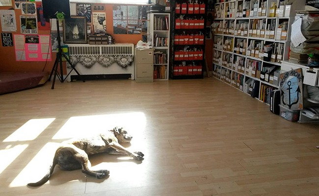 A dog enjoying a sunbeam at Radstorm. - SUBMITTED