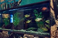 Wheeler's fish friends at the IWK.