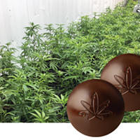 Why is it so hard to find legal edibles?