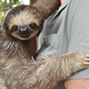 Take it slow with Lilo the sloth