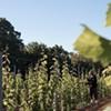 A morning at Warner Vineyards
