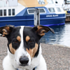 Ferry dog bother: Councillor wants to let canines cross the harbour
